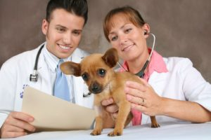Сколько зарабатывают ветеринары в России