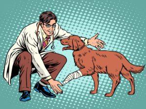 сколько получает ветеринар по регионам России